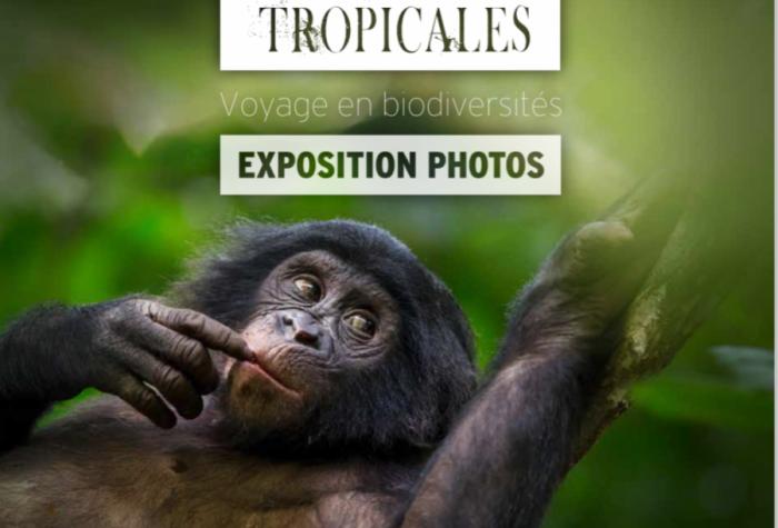 Forêts tropicales : voyage en biodiversité