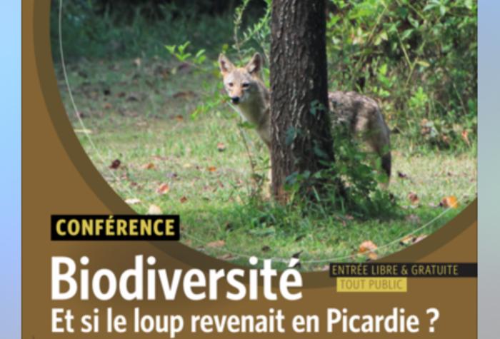 BIODIVERSITE : Et si le loup revenait en Picardie ,